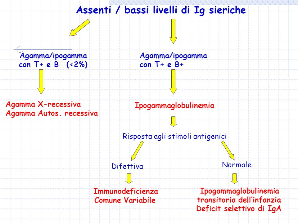 Assenti / bassi livelli di Ig sieriche