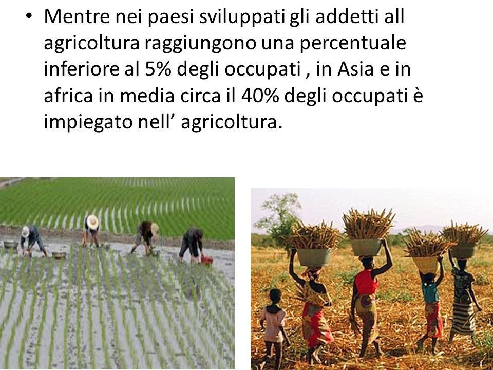 Mentre nei paesi sviluppati gli addetti all agricoltura raggiungono una percentuale inferiore al 5% degli occupati , in Asia e in africa in media circa il 40% degli occupati è impiegato nell' agricoltura.