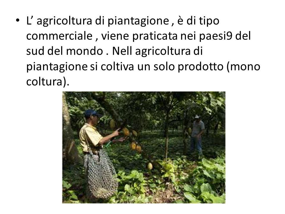 L' agricoltura di piantagione , è di tipo commerciale , viene praticata nei paesi9 del sud del mondo .