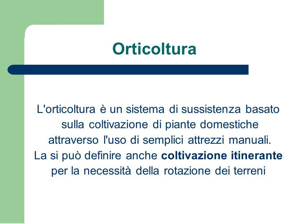 Orticoltura L orticoltura è un sistema di sussistenza basato
