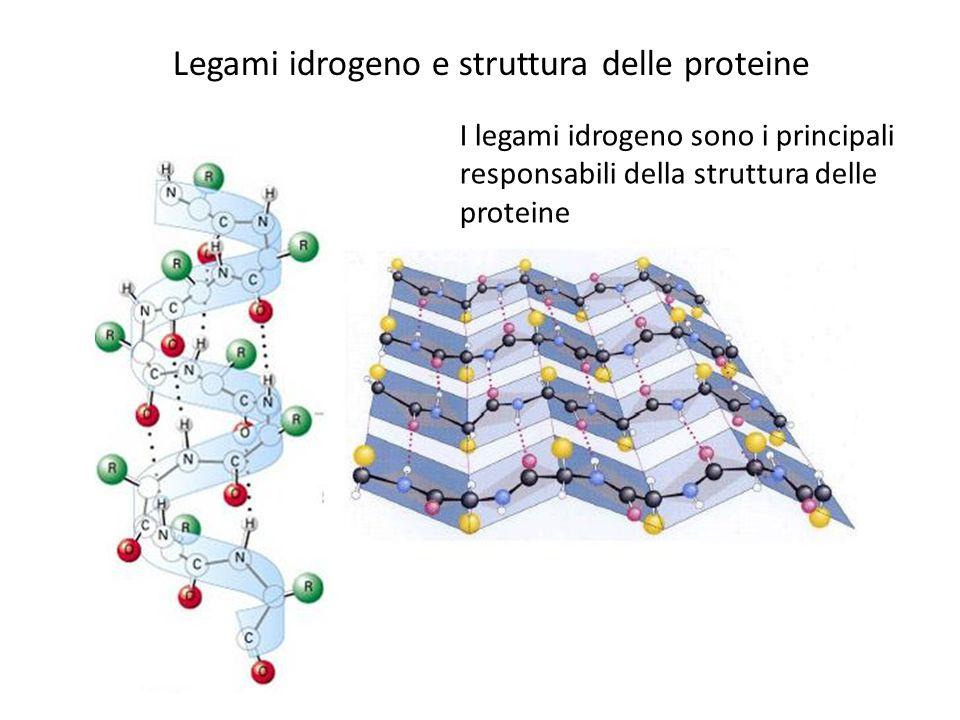 Legami idrogeno e struttura delle proteine