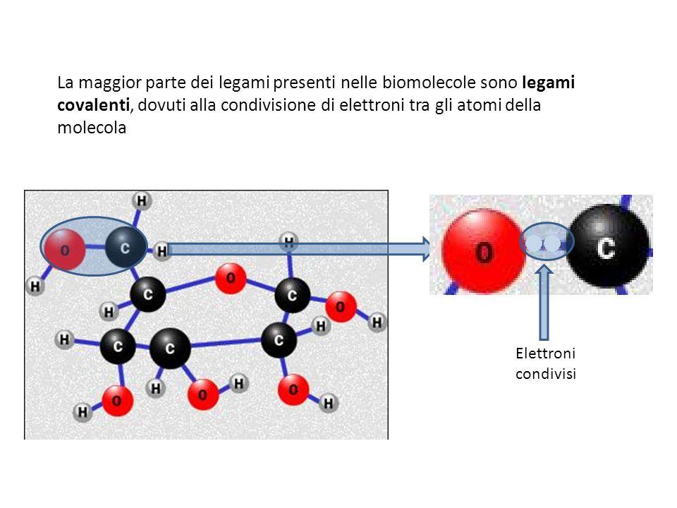 La maggior parte dei legami presenti nelle biomolecole sono legami covalenti, dovuti alla condivisione di elettroni tra gli atomi della molecola