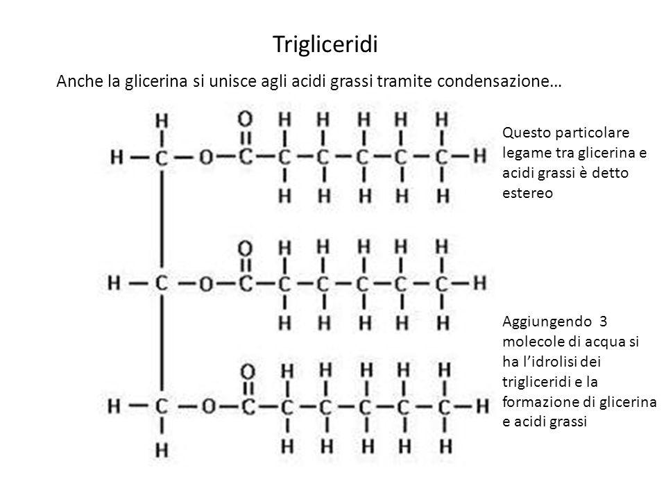 Trigliceridi Anche la glicerina si unisce agli acidi grassi tramite condensazione…