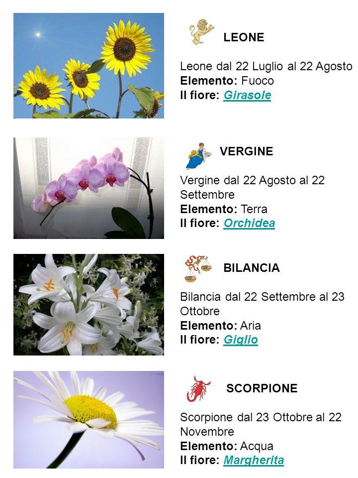 LEONE Leone dal 22 Luglio al 22 Agosto Elemento: Fuoco Il fiore: Girasole. VERGINE.