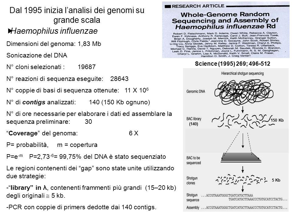 Dal 1995 inizia l'analisi dei genomi su grande scala