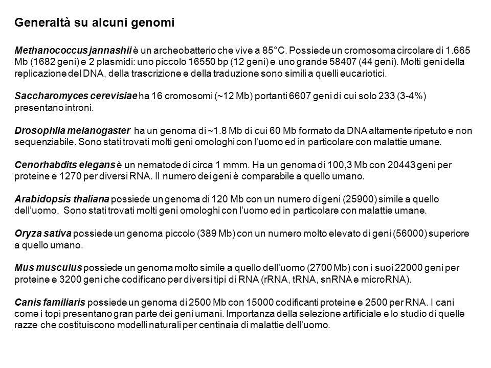 Generaltà su alcuni genomi