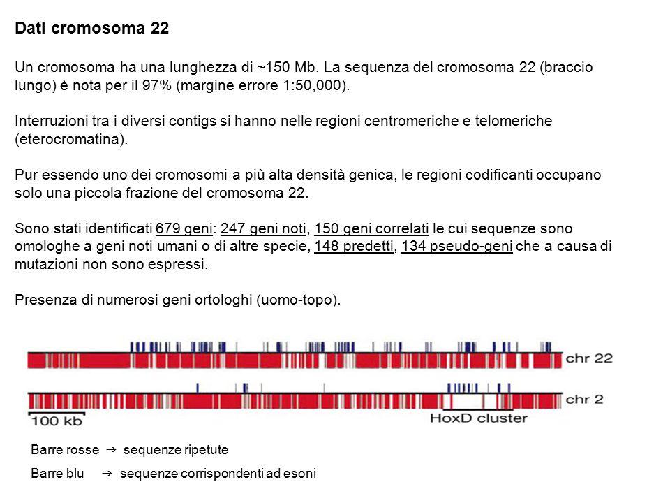 Dati cromosoma 22 Un cromosoma ha una lunghezza di ~150 Mb. La sequenza del cromosoma 22 (braccio lungo) è nota per il 97% (margine errore 1:50,000).