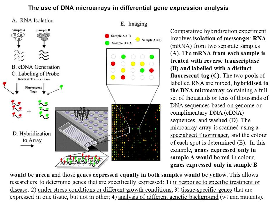 The use of DNA microarrays in differential gene expression analysis