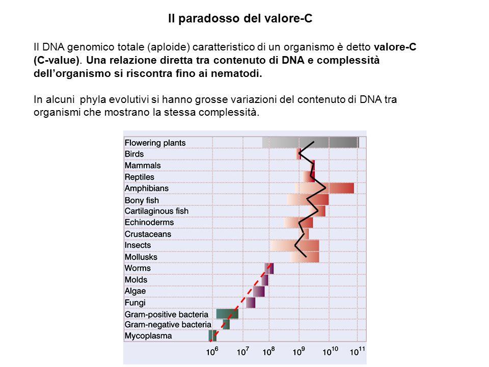 Il paradosso del valore-C