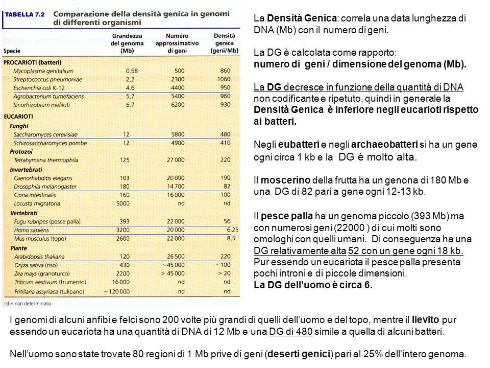La Densità Genica: correla una data lunghezza di DNA (Mb) con il numero di geni.