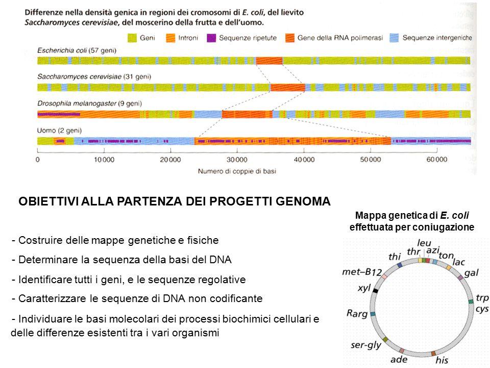 Mappa genetica di E. coli effettuata per coniugazione