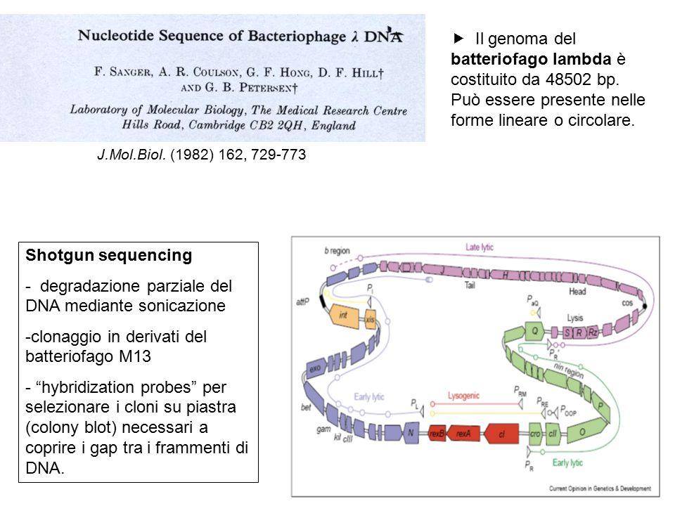 degradazione parziale del DNA mediante sonicazione