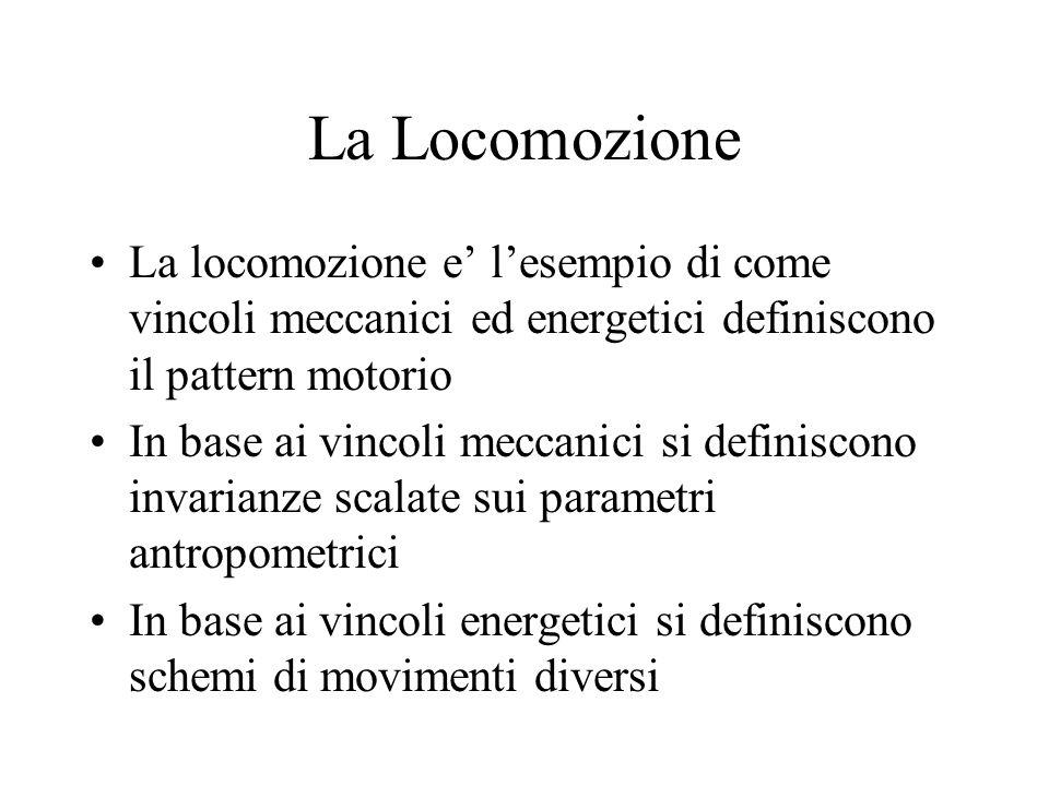 La Locomozione La locomozione e' l'esempio di come vincoli meccanici ed energetici definiscono il pattern motorio.