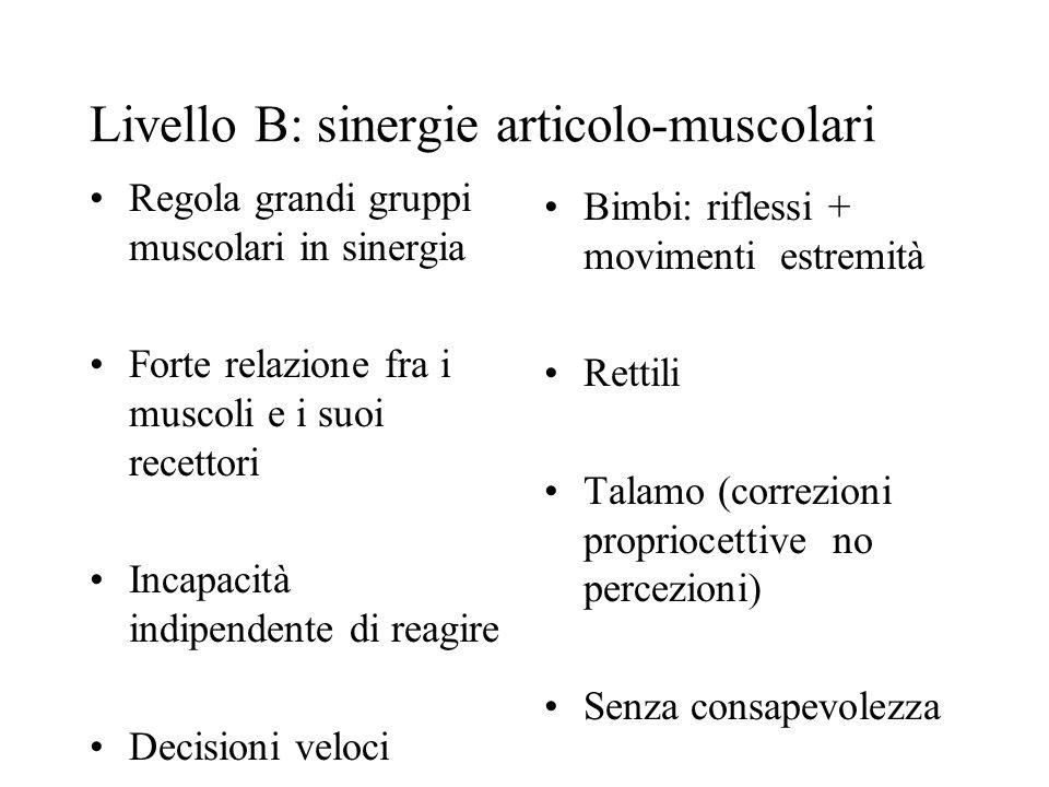 Livello B: sinergie articolo-muscolari