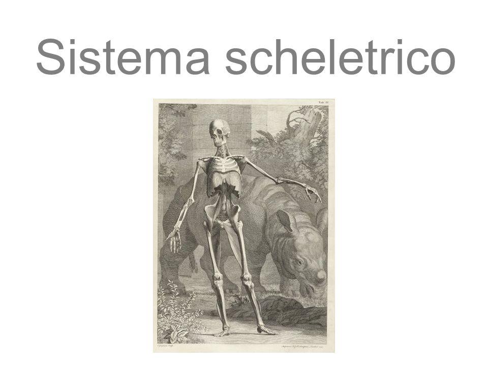Sistema scheletrico 27/11/11 09/09/12 1 1 1