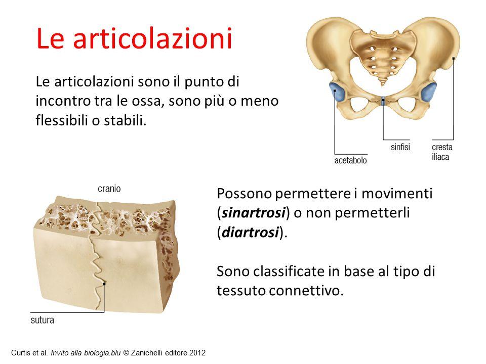27/11/11 09/09/12. Le articolazioni. Le articolazioni sono il punto di incontro tra le ossa, sono più o meno flessibili o stabili.