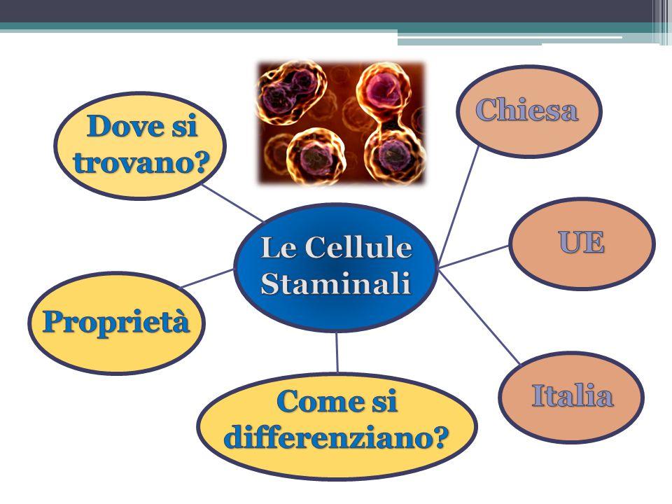 Chiesa Dove si trovano UE Le Cellule Staminali Proprietà Italia Come si differenziano