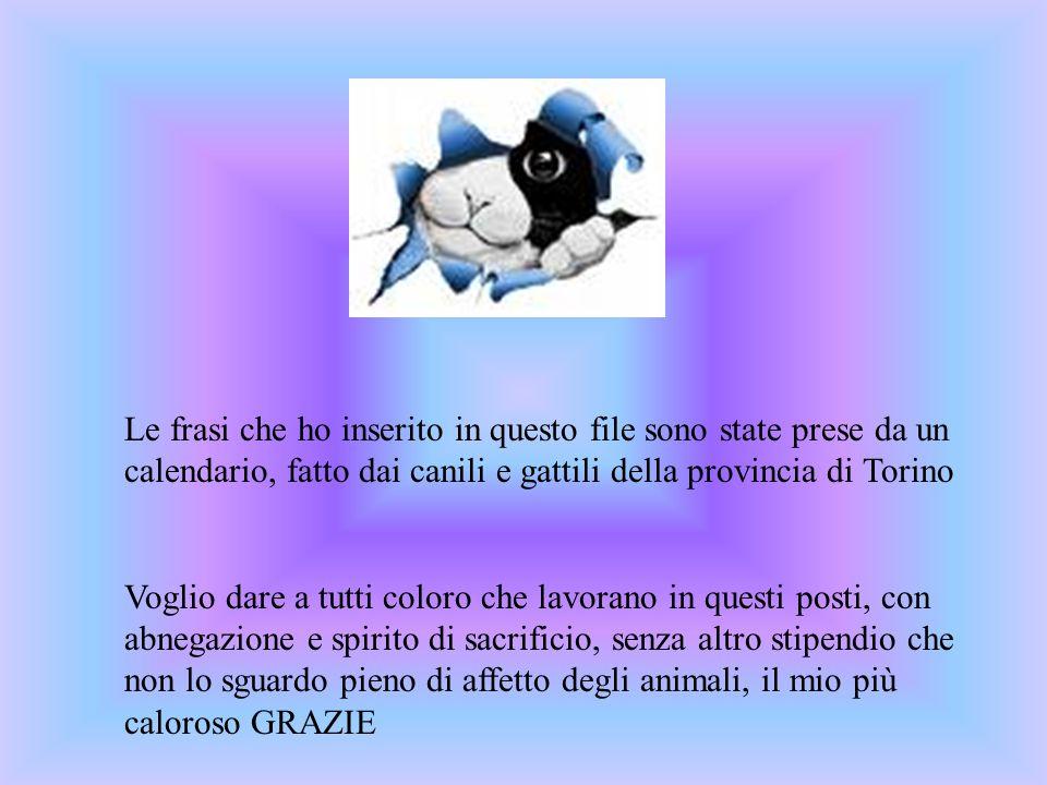 Le frasi che ho inserito in questo file sono state prese da un calendario, fatto dai canili e gattili della provincia di Torino