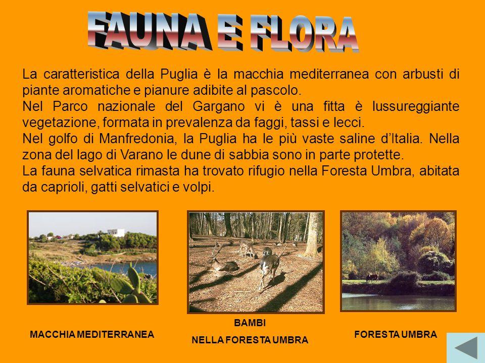 FAUNA E FLORA La caratteristica della Puglia è la macchia mediterranea con arbusti di piante aromatiche e pianure adibite al pascolo.