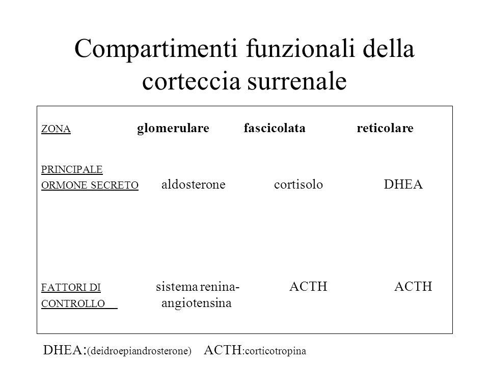Compartimenti funzionali della corteccia surrenale
