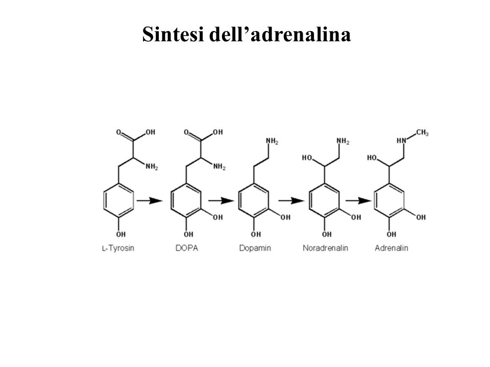 Sintesi dell'adrenalina