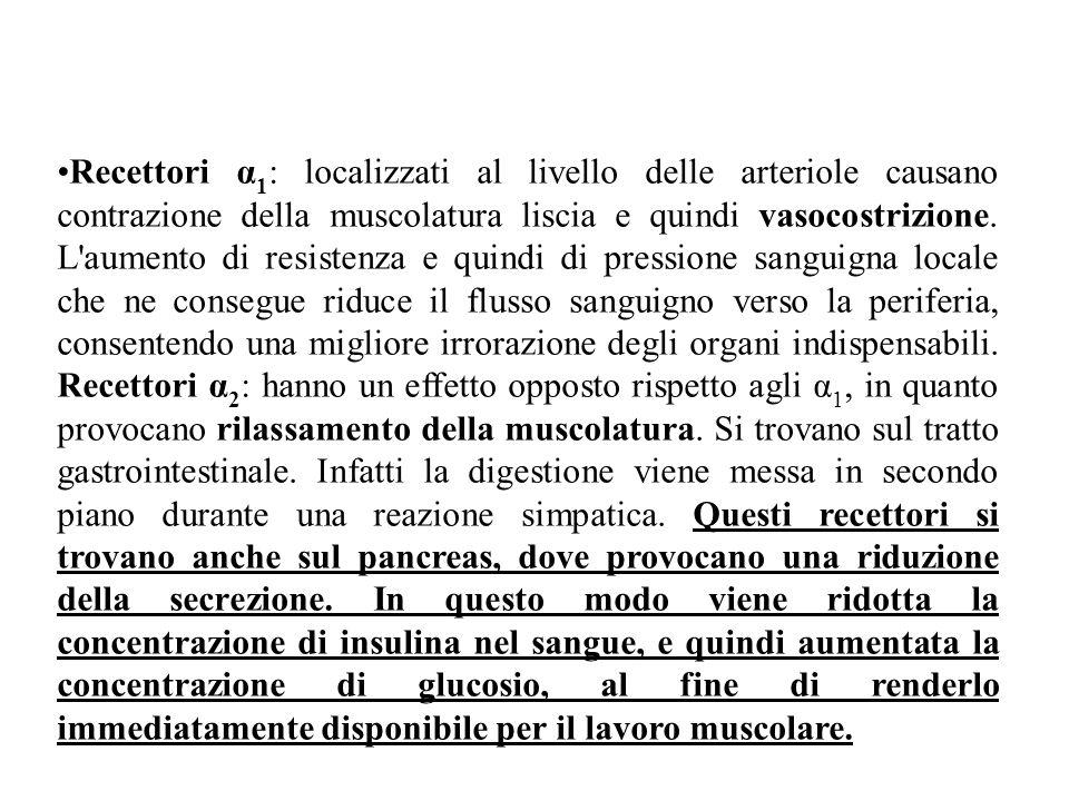 Recettori α1: localizzati al livello delle arteriole causano contrazione della muscolatura liscia e quindi vasocostrizione.