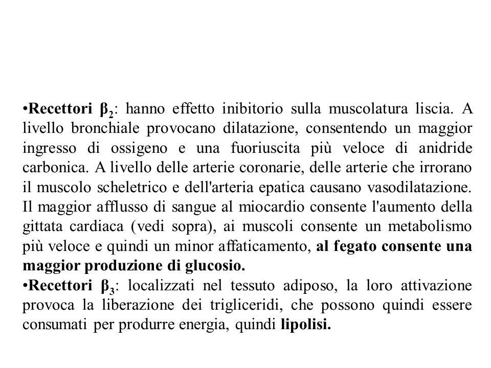 Recettori β2: hanno effetto inibitorio sulla muscolatura liscia