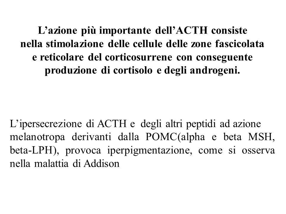 L'azione più importante dell'ACTH consiste