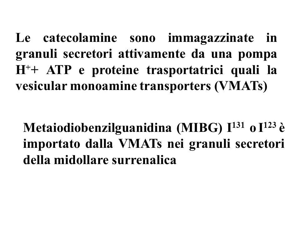Le catecolamine sono immagazzinate in granuli secretori attivamente da una pompa H++ ATP e proteine trasportatrici quali la vesicular monoamine transporters (VMATs)