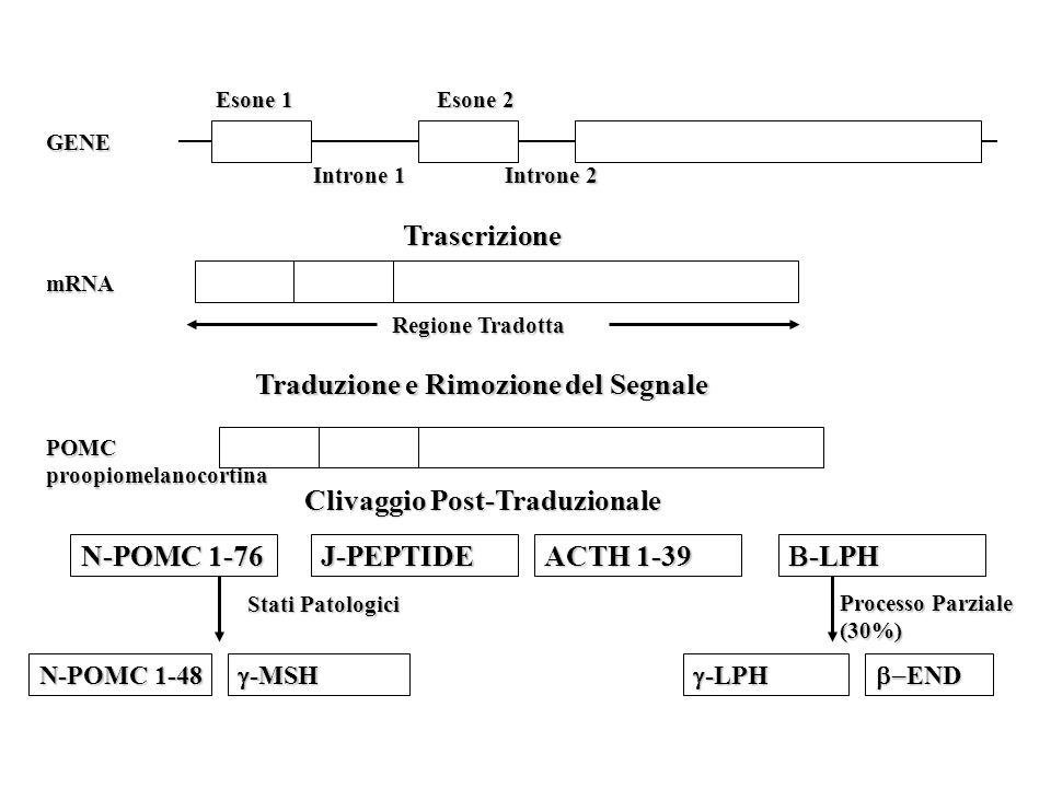 Traduzione e Rimozione del Segnale Trascrizione