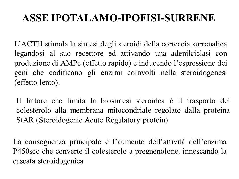 ASSE IPOTALAMO-IPOFISI-SURRENE