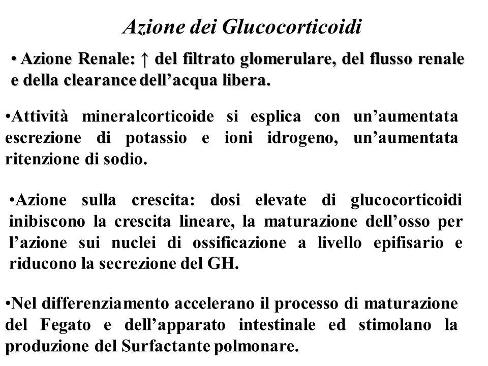 Azione dei Glucocorticoidi