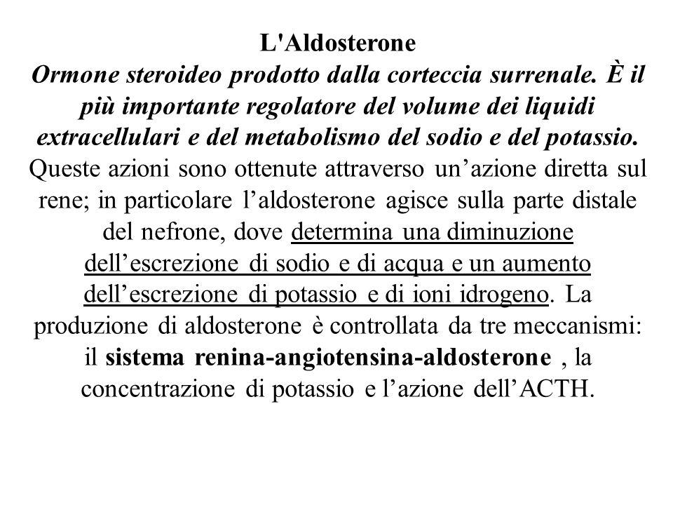 L Aldosterone Ormone steroideo prodotto dalla corteccia surrenale