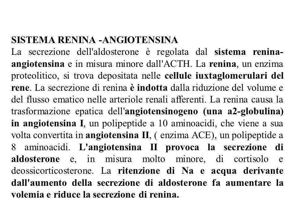 SISTEMA RENINA -ANGIOTENSINA