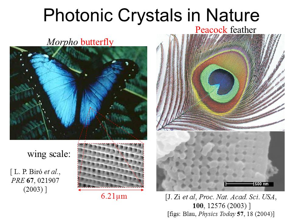 Photonic Crystals in Nature