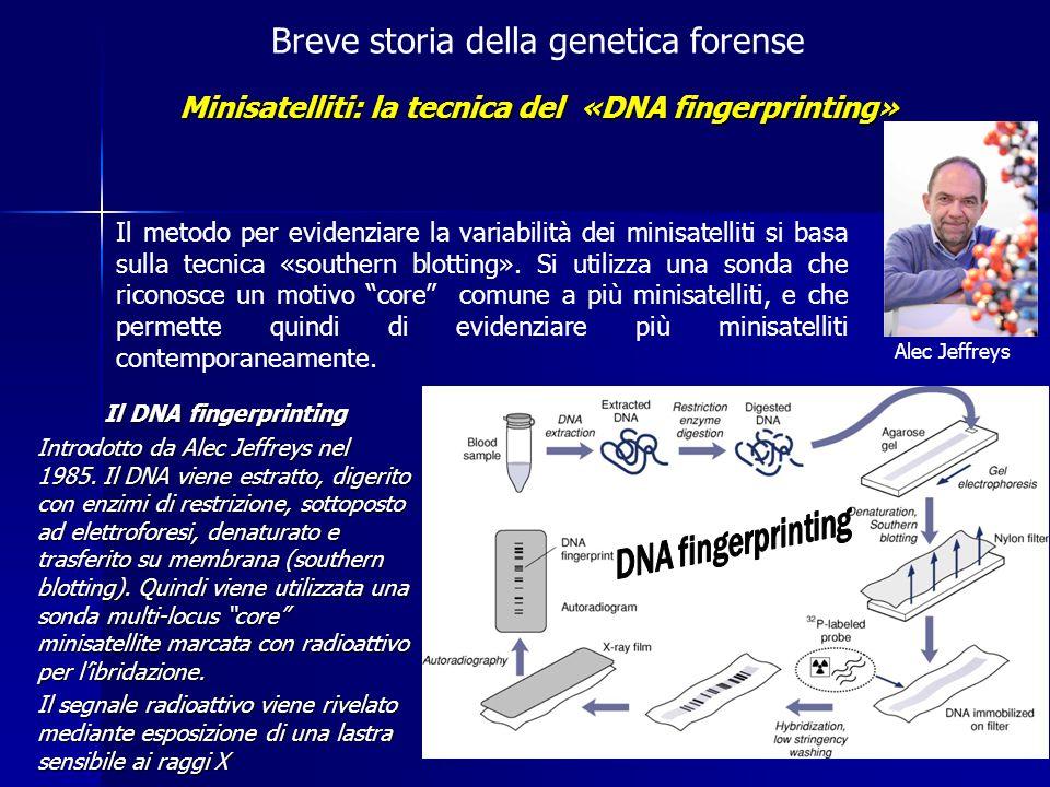 Minisatelliti: la tecnica del «DNA fingerprinting»