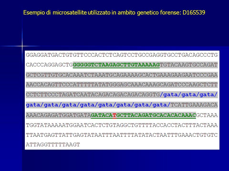 Esempio di microsatellite utilizzato in ambito genetico forense: D16S539