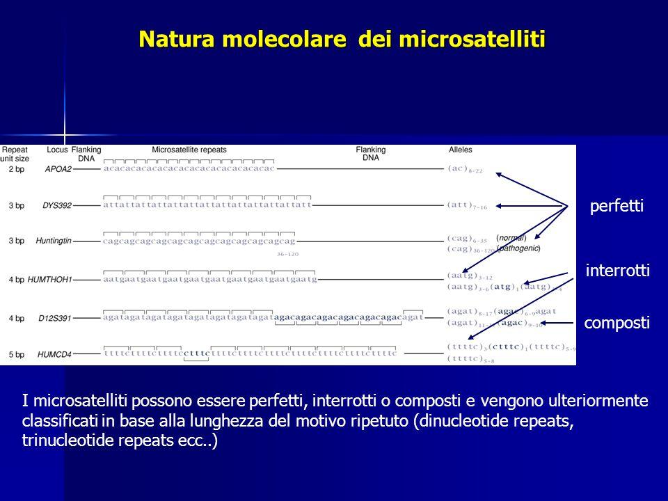 Natura molecolare dei microsatelliti
