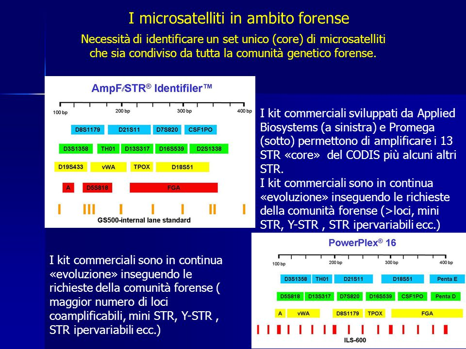 I microsatelliti in ambito forense