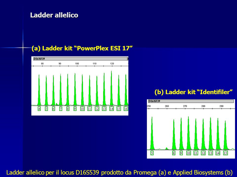 Ladder allelico (a) Ladder kit PowerPlex ESI 17