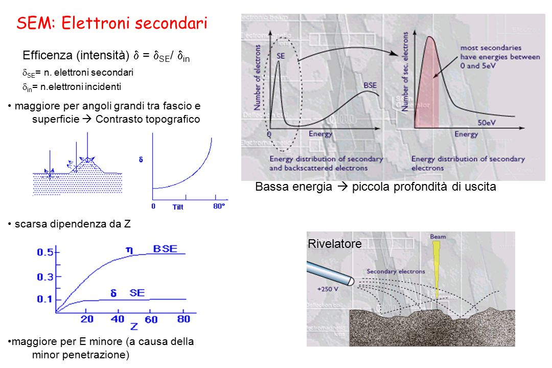 SEM: Elettroni secondari