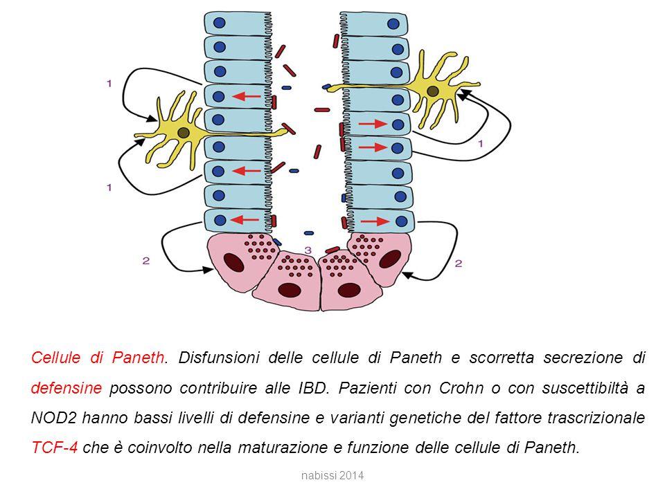 Cellule di Paneth. Disfunsioni delle cellule di Paneth e scorretta secrezione di defensine possono contribuire alle IBD. Pazienti con Crohn o con suscettibiltà a NOD2 hanno bassi livelli di defensine e varianti genetiche del fattore trascrizionale TCF-4 che è coinvolto nella maturazione e funzione delle cellule di Paneth.