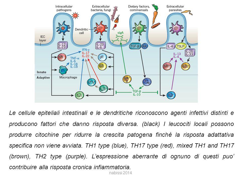 Le cellule epiteliali intestinali e le dendritiche riconoscono agenti infettivi distinti e producono fattori che danno risposta diversa. (black) I leucociti locali possono produrre citochine per ridurre la crescita patogena finchè la risposta adattativa specifica non viene avviata. TH1 type (blue), TH17 type (red), mixed TH1 and TH17 (brown), TH2 type (purple). L'espressione aberrante di ognuno di questi puo' contribuire alla risposta cronica infiammatoria.