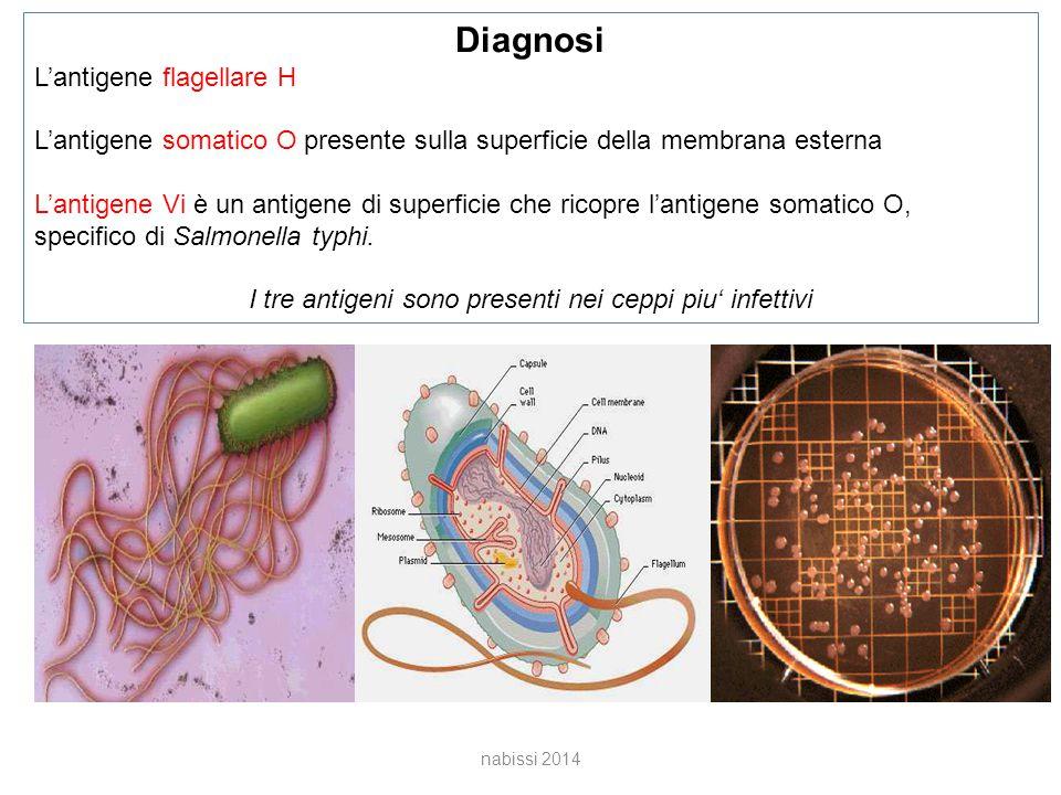 I tre antigeni sono presenti nei ceppi piu' infettivi