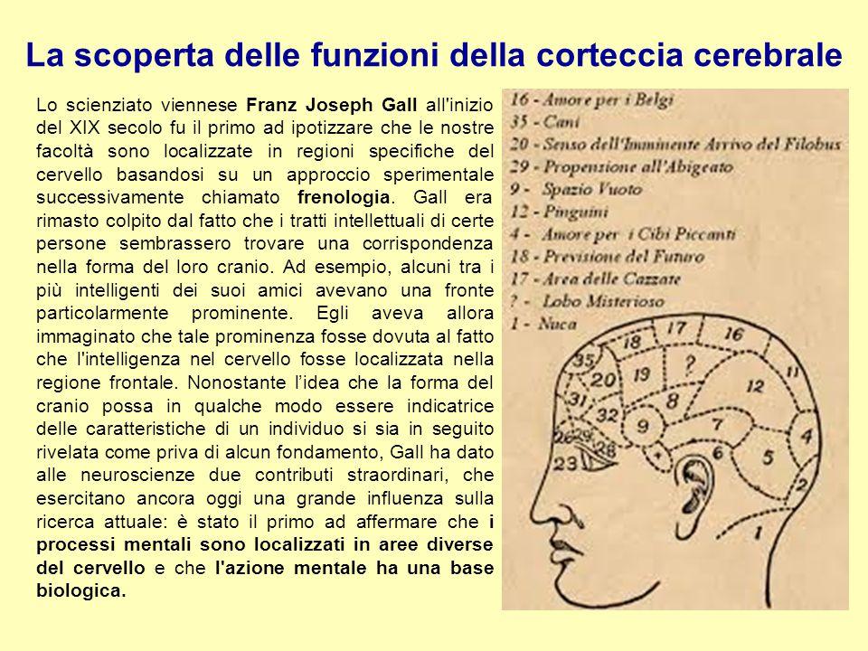 La scoperta delle funzioni della corteccia cerebrale