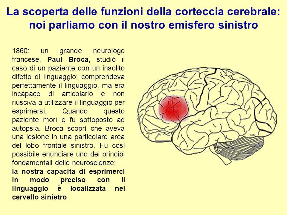 La scoperta delle funzioni della corteccia cerebrale: noi parliamo con il nostro emisfero sinistro