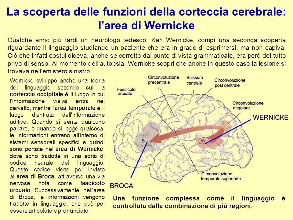 La scoperta delle funzioni della corteccia cerebrale: l'area di Wernicke