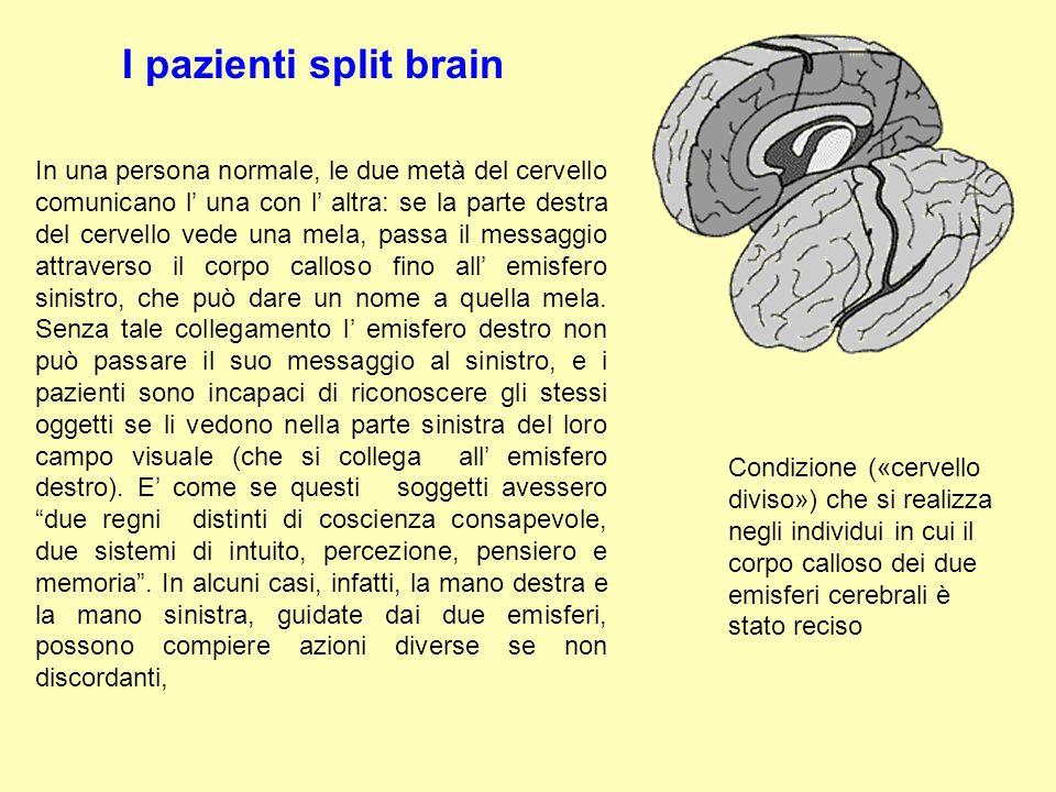 I pazienti split brain