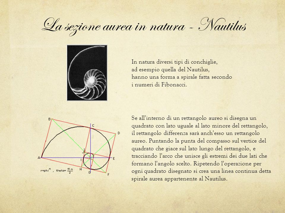 La sezione aurea in natura - Nautilus