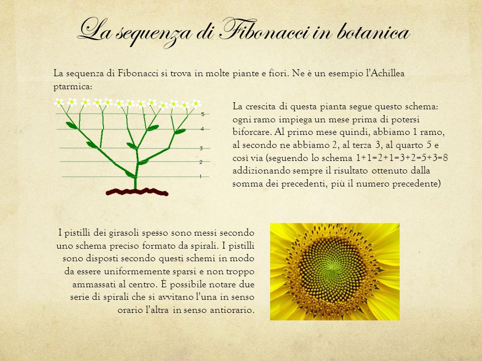 La sequenza di Fibonacci in botanica